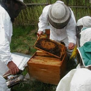 Animation : S'initier à l'apiculture