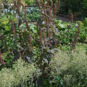 S'initier à l'herboristerie : L'ortie et ses usages.