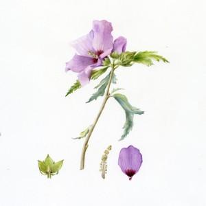 Exposition : aquarelles de Béatrice Saalburg